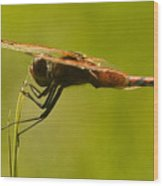 Dragonfly Holding On Tight Wood Print