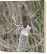 Dragonfly I Wood Print
