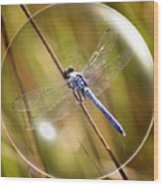 Dragonfly In A Bubble Wood Print