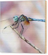 Dragonfly In Balance Wood Print
