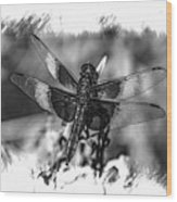 Dragonfly In Black And White Wood Print