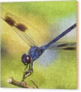 Dragonfly In Blue Wood Print