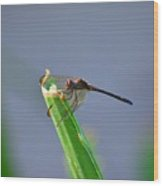 Dragonfly In Costa Rica Wood Print