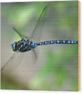 Dragonfly In Flight 2 Wood Print