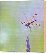 Dragonfly In Flight Wood Print