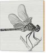 Dragonfly In Monotone Wood Print