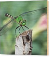 Dragonfly In The Flower Garden Wood Print