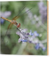 Dragonfly In The Lavender Garden Wood Print by Rona Black