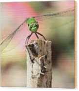 Dragonfly In The Petunias Wood Print