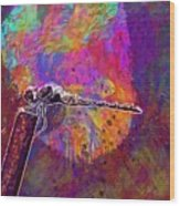 Dragonfly Insect Close Wing  Wood Print