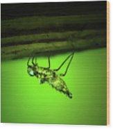 Dragonfly Nymph Wood Print