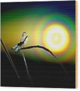 Dragonfly Of Color Wood Print