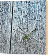 Dragonfly On A Bench Wood Print