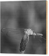 Dragonfly On A Flower In Black And White Wood Print