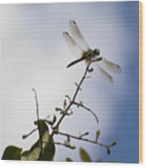Dragonfly On A Limb Wood Print