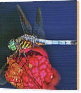 Dragonfly On A Pitcher Plant 009 Wood Print