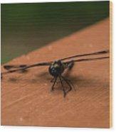 Dragonfly On A Porch Railing Wood Print