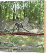 Dragonfly On Barbed Wire Wood Print