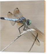 Dragonfly On Bent Reed Wood Print