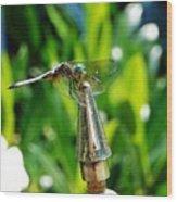 Dragonfly On Flag Post Wood Print