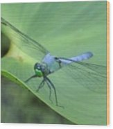 Dragonfly On Lily Wood Print