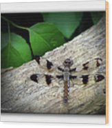 Dragonfly On Log Wood Print