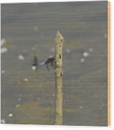 Dragonfly On Old Wood Wood Print
