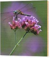 Dragonfly On Purple Verbena Wood Print