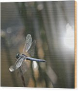 Dragonfly On Reed Wood Print