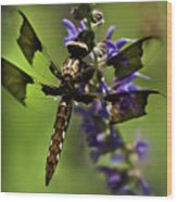 Dragonfly On Salvia Wood Print