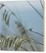 Dragonfly On Sea Oats Wood Print by Robert  Suits Jr