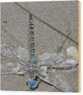 Dragonfly On The Beach Wood Print