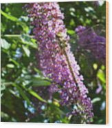 Dragonfly On The Butterfly Bush Wood Print