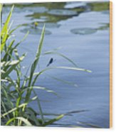 Dragonfly On The Lake Wood Print