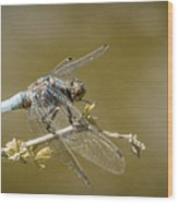 Dragonfly On The Spot Wood Print
