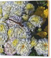 Dragonfly On White Mums Wood Print