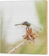 Dragonfly Perch Wood Print