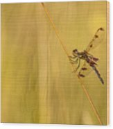 Dragonfly Pole Dance Wood Print