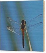 Dragonfly Portrait Wood Print