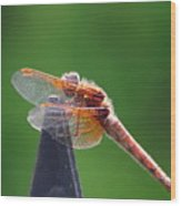 Dragonfly Red Wood Print