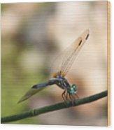 Dragonfly Ref.13 Wood Print