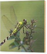 Dragonfly Rest Wood Print