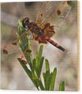 Dragonfly Resting 2 Wood Print