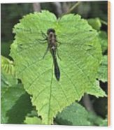 Dragonfly Resting Wood Print