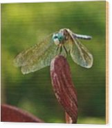 Dragonfly Resting II Wood Print