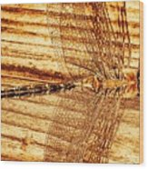 Dragonfly Sepia Wood Print