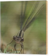 Dragonfly Up Close Wood Print
