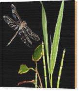 Dragonfly Wings Wood Print