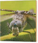 Dragonfly Wiping Its Eyes Wood Print
