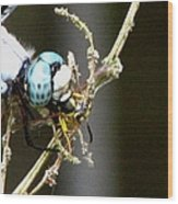 Dragonfly With Yellowjacket 2 Wood Print